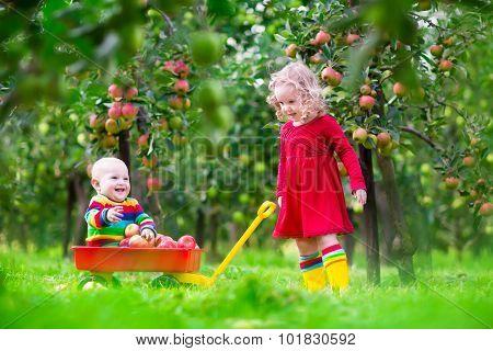 Children Picking Apples In Fruit Garden