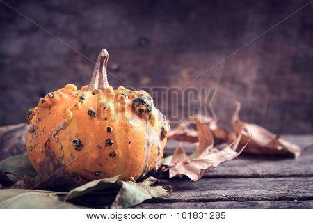 Single Scary Pumpkin