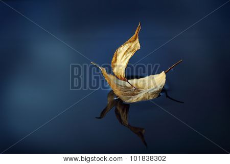 leaf ship in blue water