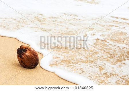 Coconut On Wet Yellow Beach Sand And Foamy Wave Water