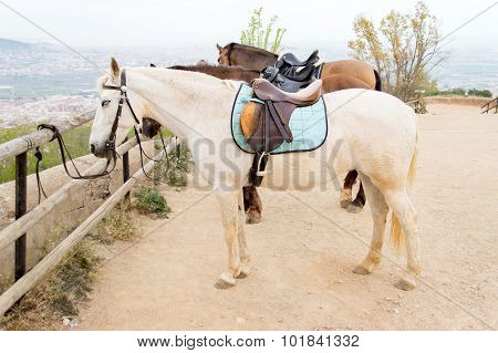 Horses Tied On Wooden Rail In Trail Horse Mountain