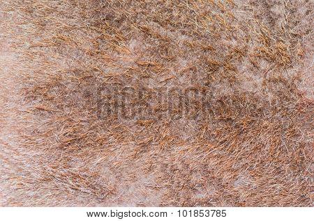 Fur Struktur