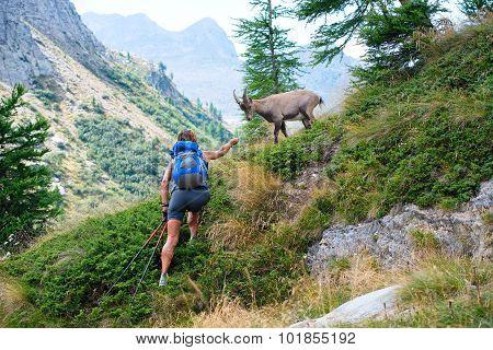 Woman And Ibex