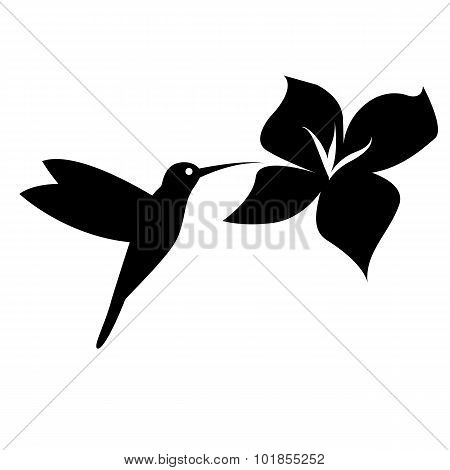 Hummingbird silhouette black on white background