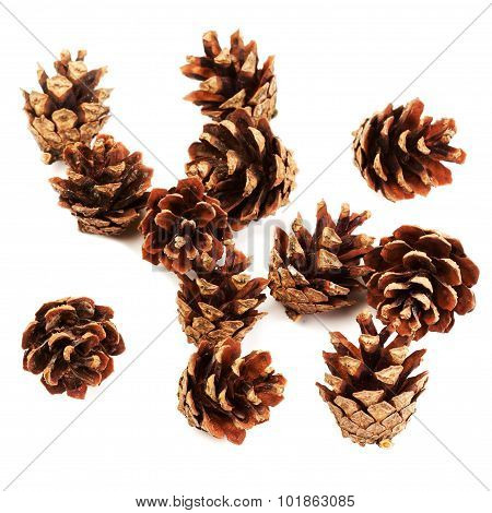 Set Of Cones Various Coniferous Trees Isolated On White Background. Pine Cones Close
