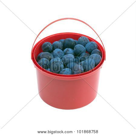 Ripe blue plums in red bucket isolated