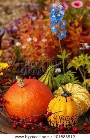 Pumpkin In Garden