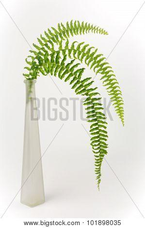 Vase and Ferns