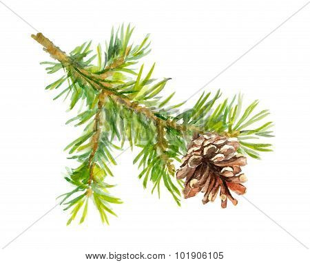 Fir tree branch with cone. Watercolor