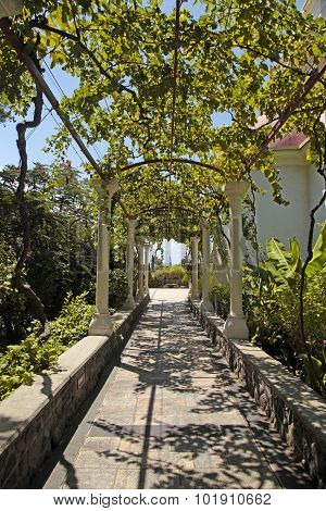 Pergola Passage In The Garden
