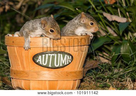 Baby Gray Squirrels