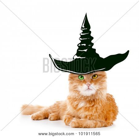 Cat with witch hat for halloween, isolated on white