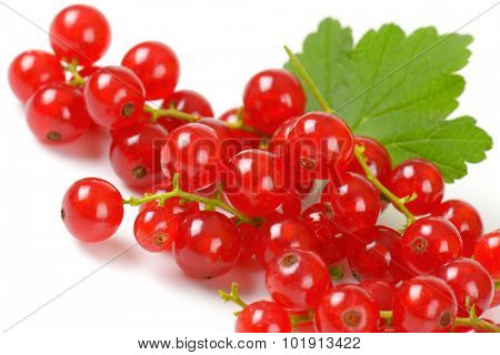 crimson balls of fresh red currant with stem