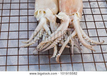 Fresh White Squid On Flat Iron Sieve In Thai Market