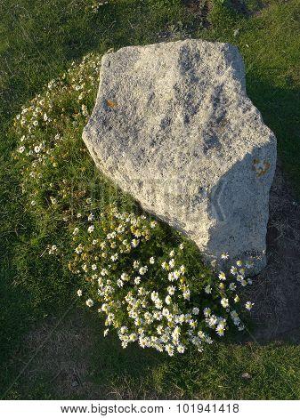 Flowers Around Rock Boulder