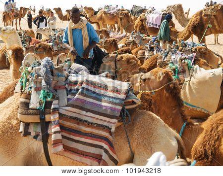 Camels Caravan In Sahara
