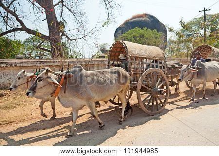 Ox Carts In Mingun, Myanmar