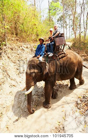 Elephant Ride In Maesa Camp, Thailand