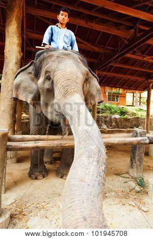 Maesa Elephant Camp, Thailand