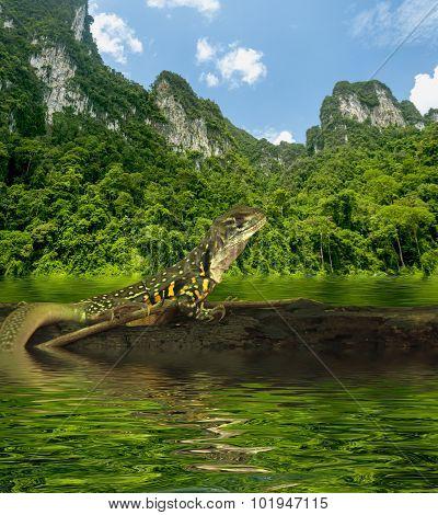 Chameleon Iguana On Timber Decay