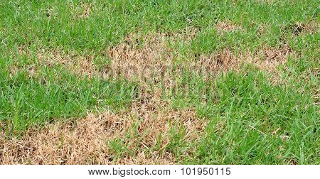 Dry Burnt Dead Grass On Hard Dry Clay, Natural Background