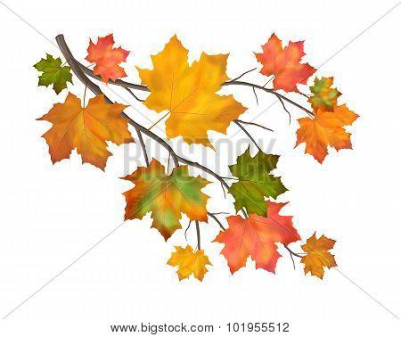 Vector Autumn Branch