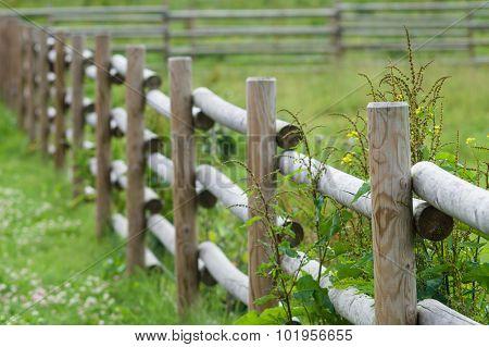 Rural Wooden Hedge Closeup, Part Of Farm Cattle-pen