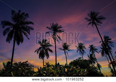 Grove Of Coconut Trees On A Sunny Day