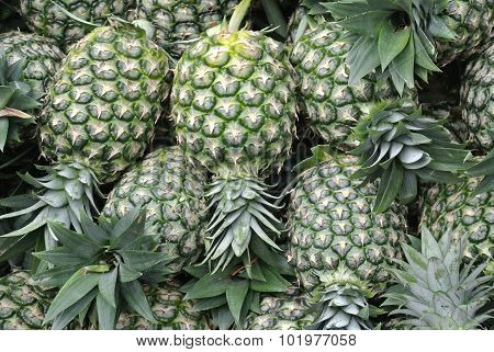 Pile of pineapples fruit or ananas comosus fruit