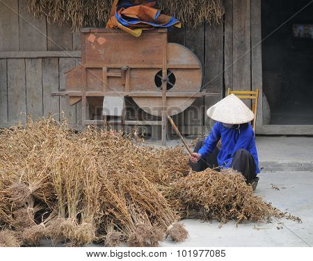 Vietnamese People Working At House