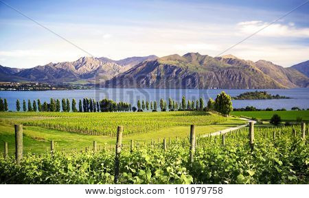 Beautiful Countryside New Zealand Farm Agriculture Concept