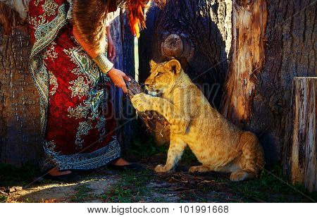 young woman with ornamental dress and gold jewel playing with lion cub in nature. lion playing with