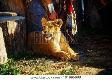 woman with ornamental dress and gold jewel playing with lion cub in nature.