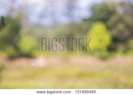 De Focus Abstract Landscape  Background
