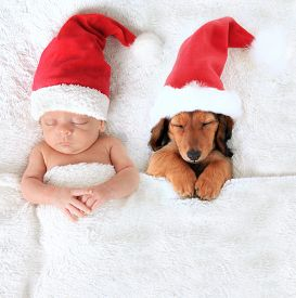 foto of puppy christmas  - Sleeping Christmas baby and dachshund puppy wearing Santa hats - JPG