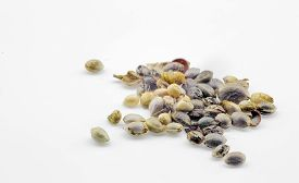picture of seed bearing  - Close view of hemp seeds macro photo - JPG