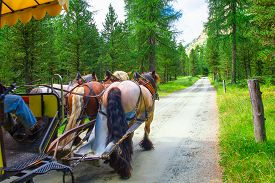 picture of carriage horse  - Carriage pulled by three horses in dirt road in the middle of a forest - JPG