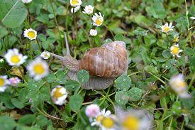 foto of garden snail  - snail home garden in the spring zvolen 23 - JPG