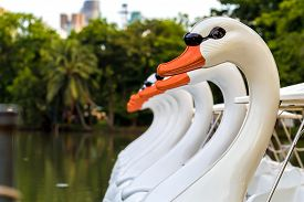 picture of pedal  - Swan paddle or pedal boat floating in lake in public park - JPG