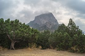 image of juniper-tree  - Views os the Crimean Mountains of juniper trees in cloudy weather - JPG