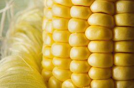 foto of corn cob close-up  - Grains of ripe corn close up on white background - JPG