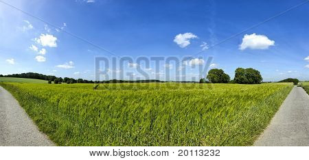 Panoramamic View Of A Rye Field View With Blue Sky And Clouds