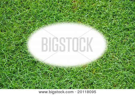 Green Grass background isolated center for web use.