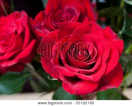 Red rose for  you love