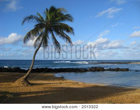 Hawaiian Palm Tree On Beach