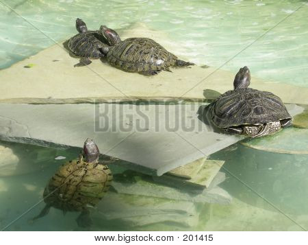 Turtles Out Of Water