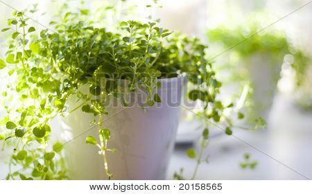 beautiful green plant