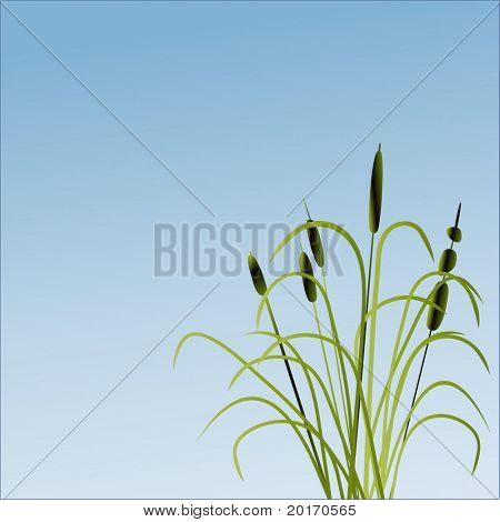 bullrushes and grass vector