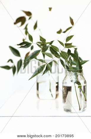 country plants in two glass jars