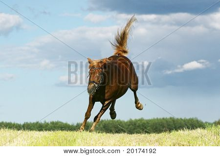 chesnut mare jumping